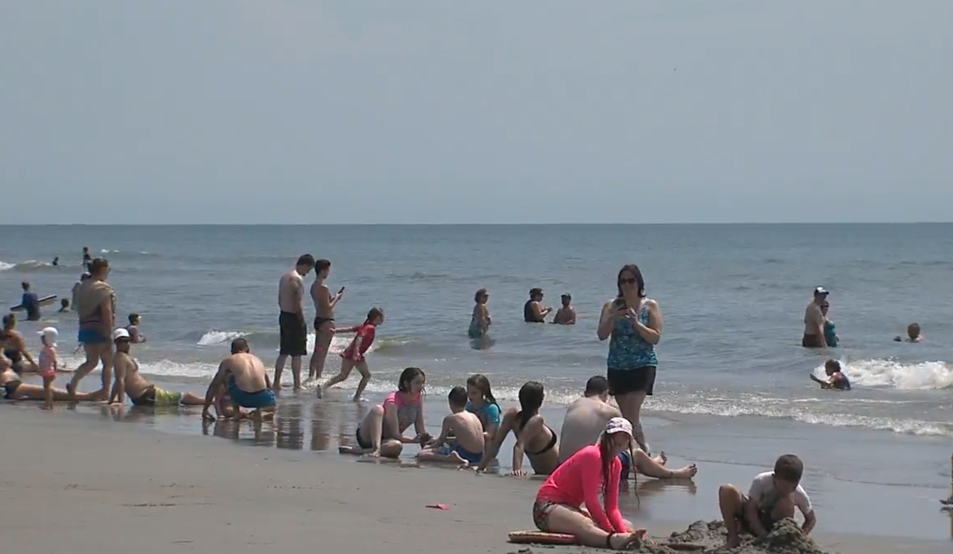 South Carolina beaches see more than 700 reports of jelly